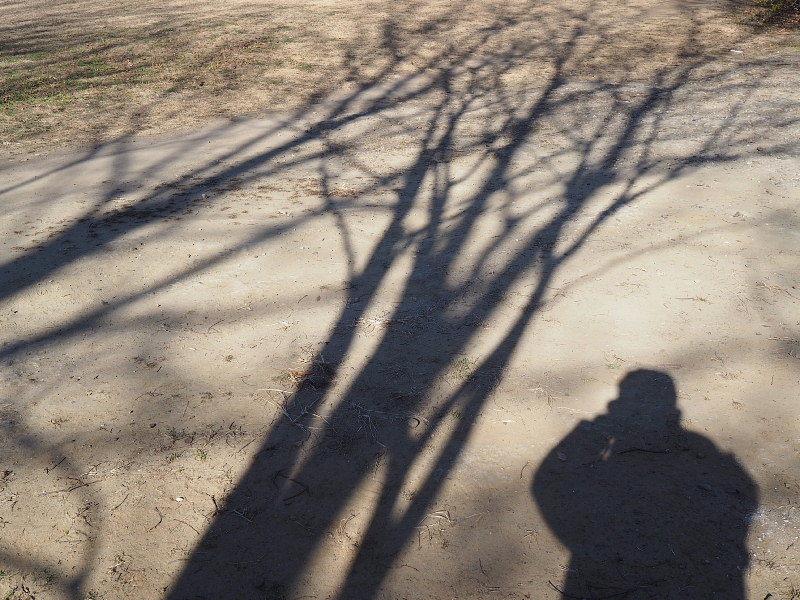 【カメラ散歩】武蔵野の風情・柳瀬川と清瀬金山緑地公園_b0008655_15593507.jpg