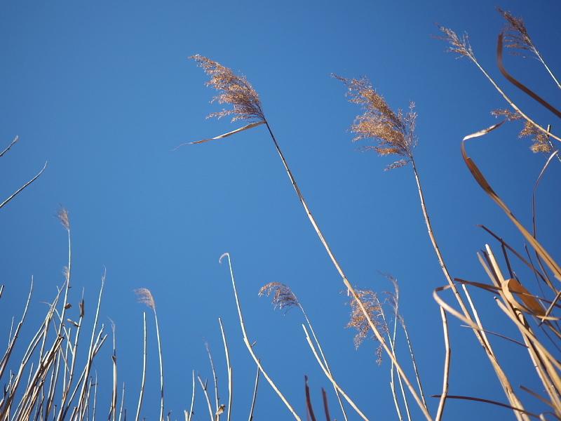 【カメラ散歩】武蔵野の風情・柳瀬川と清瀬金山緑地公園_b0008655_16023584.jpg