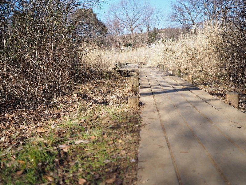 【カメラ散歩】武蔵野の風情・柳瀬川と清瀬金山緑地公園_b0008655_16032719.jpg