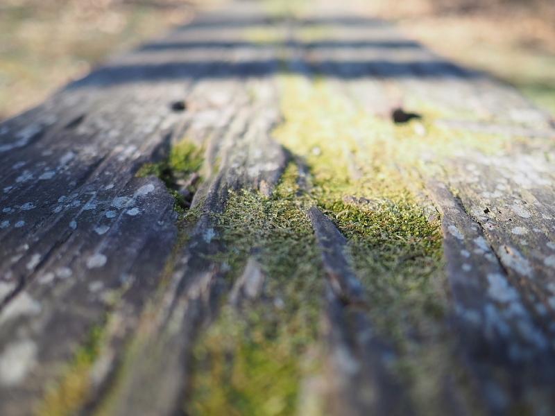 【カメラ散歩】武蔵野の風情・柳瀬川と清瀬金山緑地公園_b0008655_16033585.jpg