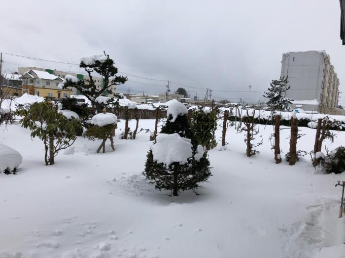 豪雪!そして寒い!_b0093660_10555477.jpg