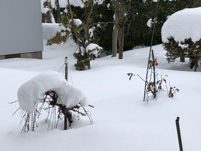 豪雪!そして寒い!_b0093660_10555597.jpg