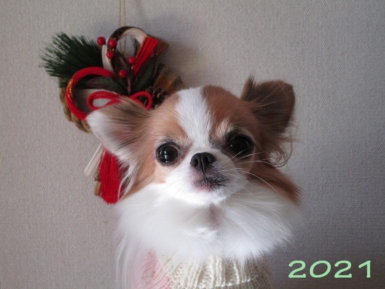 新年のご挨拶_d0006467_14370877.jpg