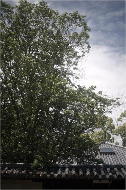 874 静寂そのもの(2020年5月20日エンラージングアナスチグマート50mmF3.5がまたしても奈良町に)_c0168172_21423964.jpg