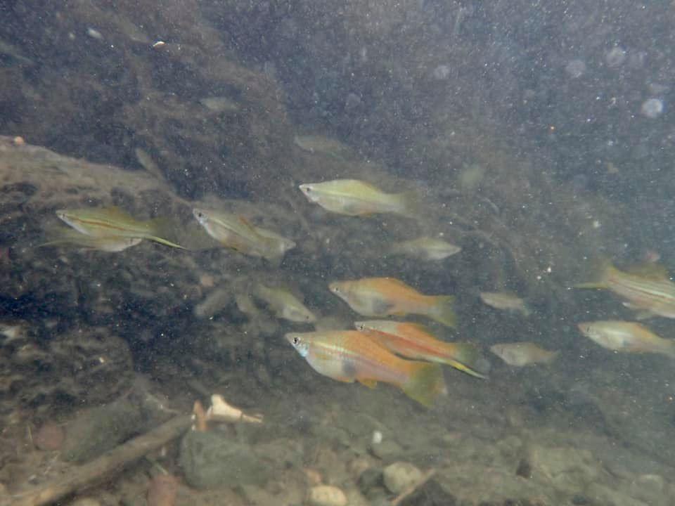 7/29 外来魚調査_a0010095_18113379.jpg
