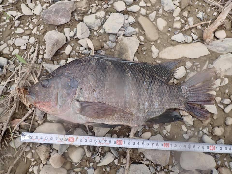 7/24 外来魚調査始めました_a0010095_18350077.jpg