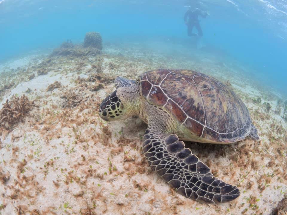 7/19 礁池アオウミガメ調査_a0010095_18474572.jpg