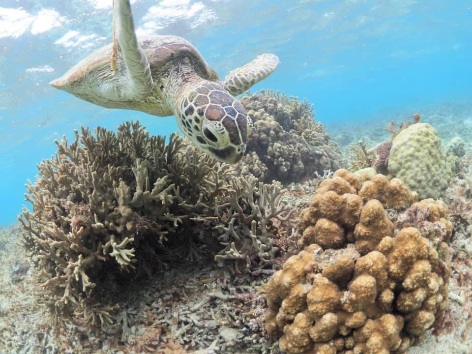 7/19 礁池アオウミガメ調査_a0010095_18474587.jpg