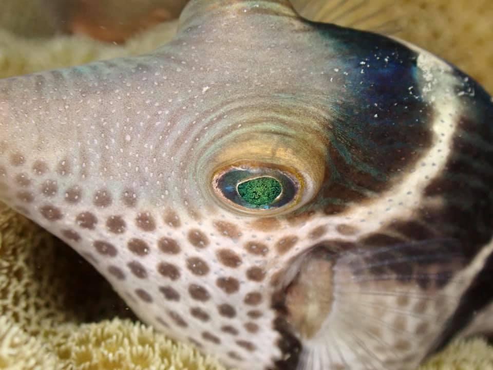 7/14 サンゴの産卵はありませんでした_a0010095_19055297.jpg