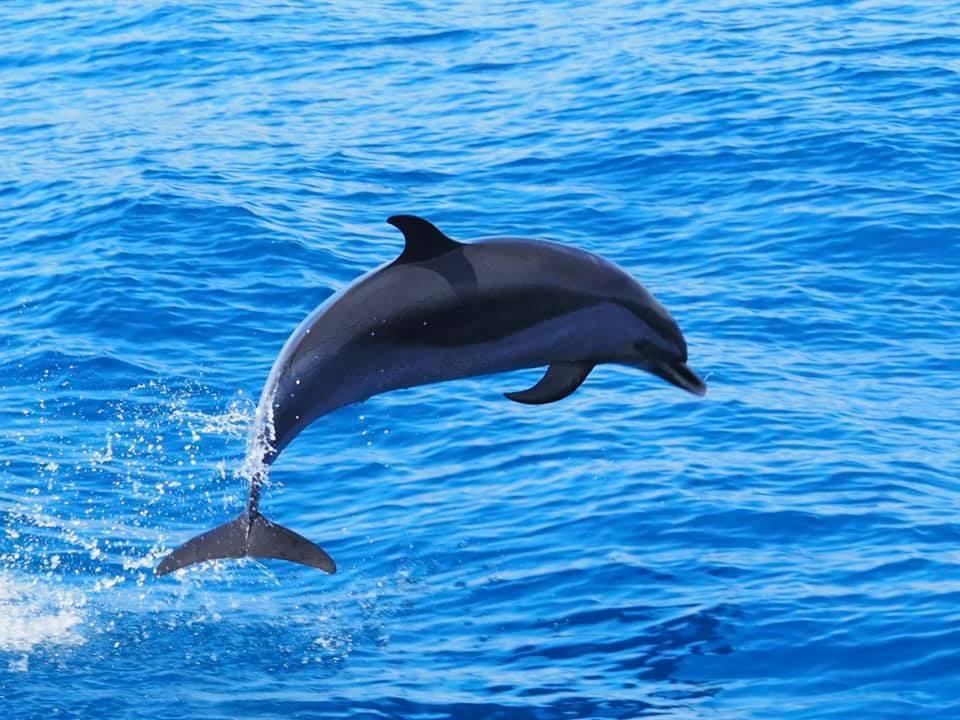 6/24 新規鯨類ウォッチング可能性調査_a0010095_20082343.jpg
