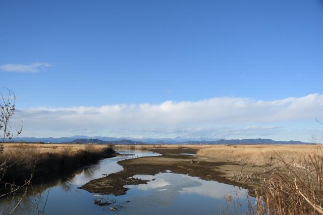 渡良瀬遊水地と新年を迎えた庭_b0356401_23093265.jpg