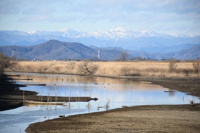 渡良瀬遊水地と新年を迎えた庭_b0356401_23094357.jpg