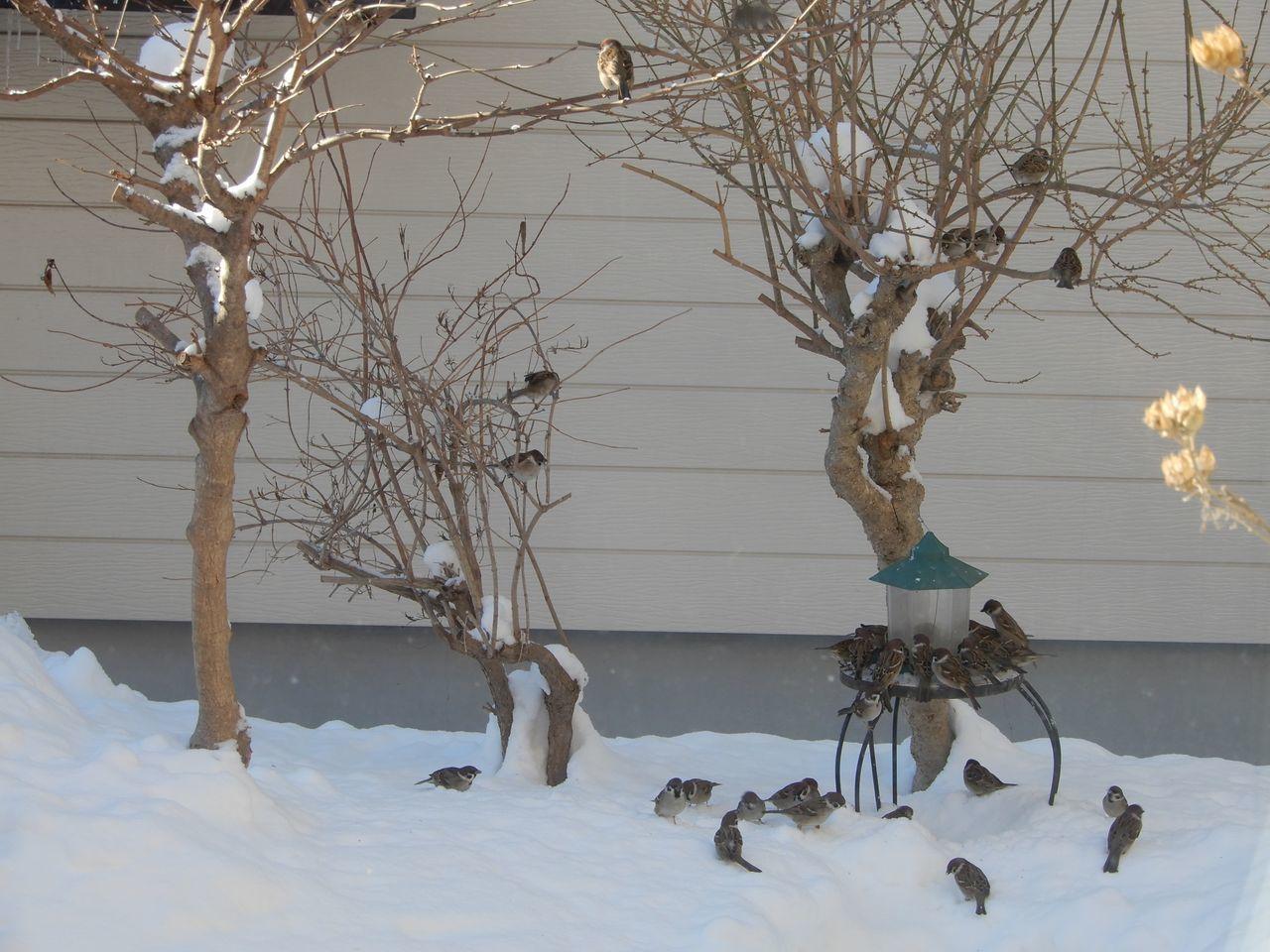 まだまだ真冬日は続きます_c0025115_21355887.jpg