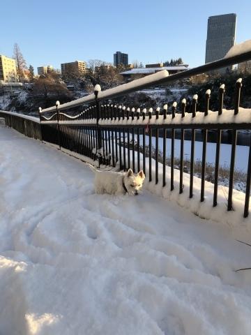 雪の翌朝_f0363961_09284057.jpeg