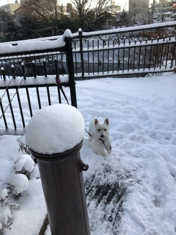 雪の翌朝_f0363961_09285003.jpeg