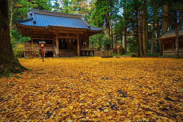 御殿場 二岡神社のイチョウ_b0145398_23010349.jpg
