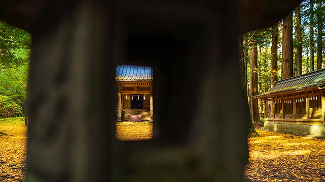 御殿場 二岡神社のイチョウ_b0145398_23034067.jpg