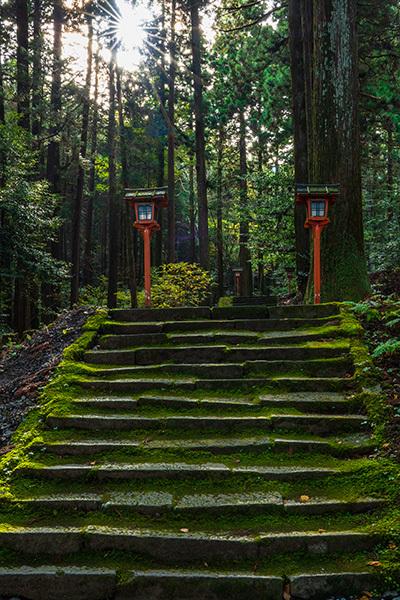 御殿場 二岡神社のイチョウ_b0145398_23363694.jpg