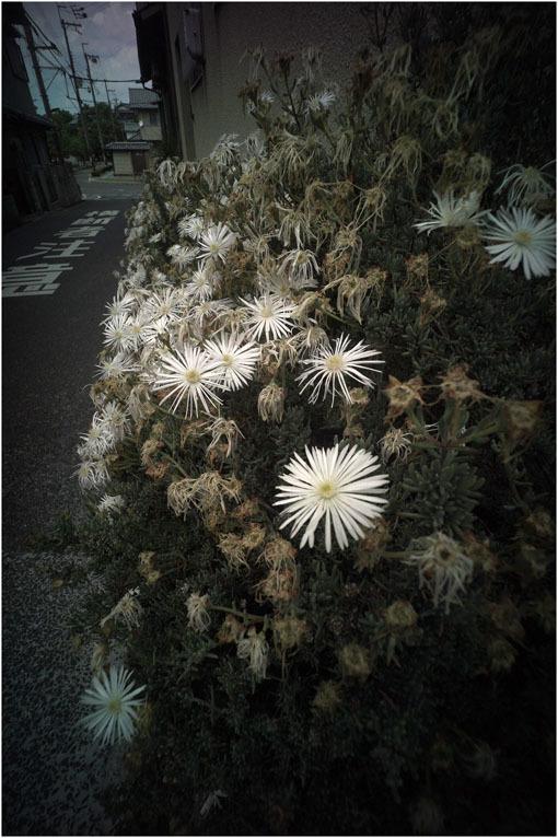 875.01 生き生きと(2020年5月30日ホロゴン15mmF8は勝手知ったる奈良町をのびのび散歩)1  奈良町へ_c0168172_22390377.jpg
