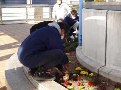 名古屋港水族館前花壇の植栽R3.1.6_d0338682_14141809.jpg
