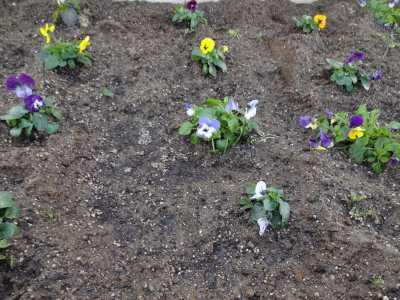 名古屋港水族館前花壇の植栽R3.1.6_d0338682_14162041.jpg