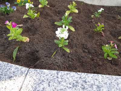 名古屋港水族館前花壇の植栽R3.1.6_d0338682_14164881.jpg