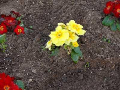 名古屋港水族館前花壇の植栽R3.1.6_d0338682_14182112.jpg