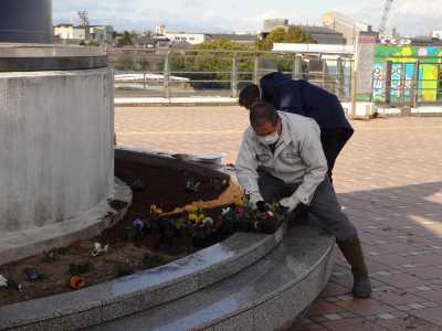 名古屋港水族館前花壇の植栽R3.1.6_d0338682_14223005.jpg
