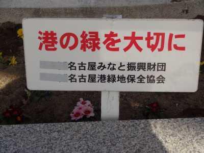 名古屋港水族館前花壇の植栽R3.1.6_d0338682_14231131.jpg
