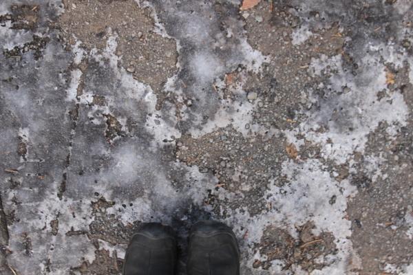 ハイジのフィールドだより「寒い日は芯からあったまろう」(2021/1/7)_b0174425_14343132.jpg