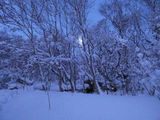 函館山通信 2021年1月8日号_e0145841_19272165.jpg