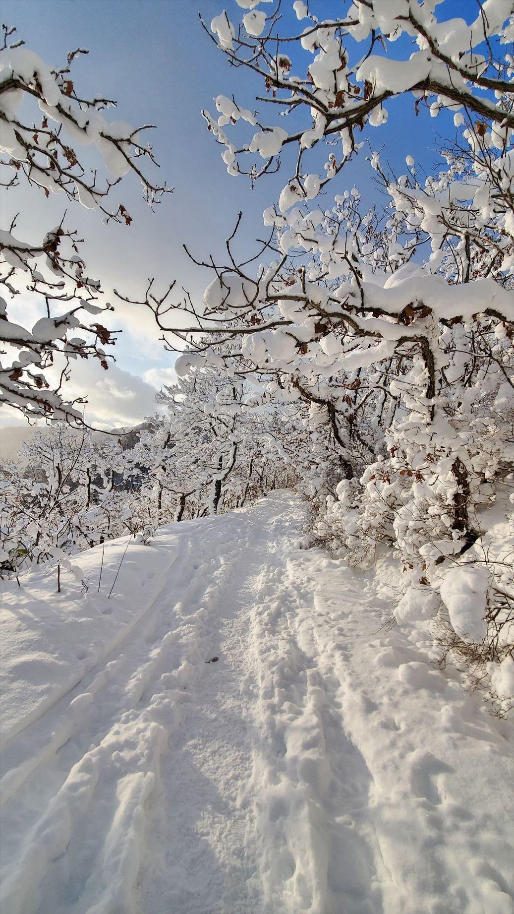 函館山通信 2021年1月8日号_e0145841_19451384.jpg