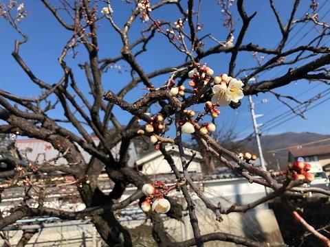 早春の甲府五山巡り_f0019247_21193625.jpg