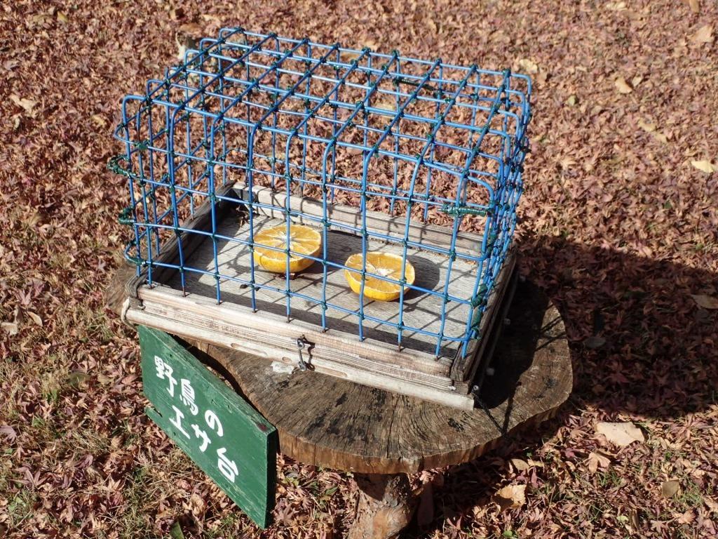 野鳥のエサ台を設置しました!_b0049307_11331672.jpg
