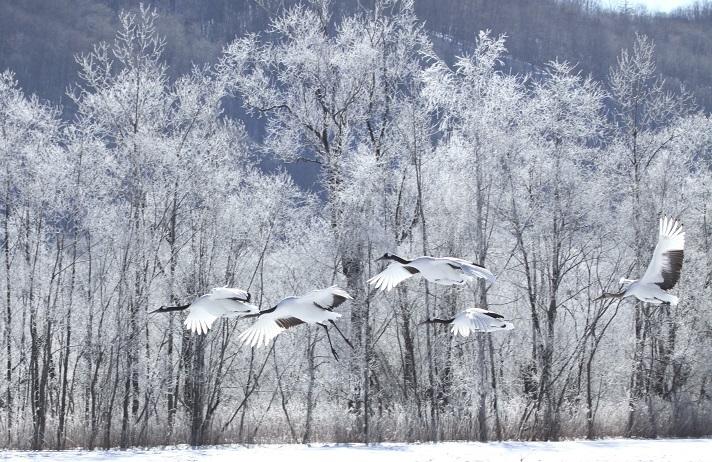雪・悲喜いろいろ 1月9日_f0113639_16421152.jpg