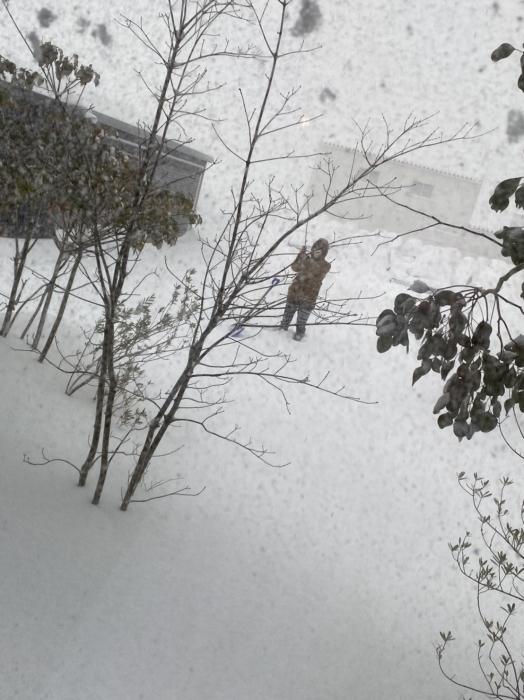 お知らせ 大雪の為お休みです_a0204961_10124319.jpg