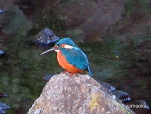 夕暮を鳥たちと過ごす。。。_f0071480_20423290.jpg