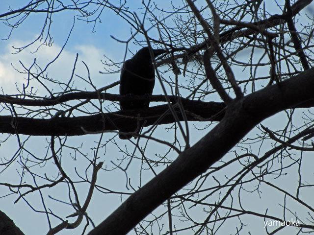 夕暮を鳥たちと過ごす。。。_f0071480_20433638.jpg