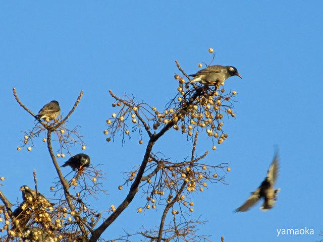 夕暮を鳥たちと過ごす。。。_f0071480_20441218.jpg