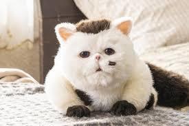 ドラマ【おじさまと猫】_d0250123_21295292.jpg