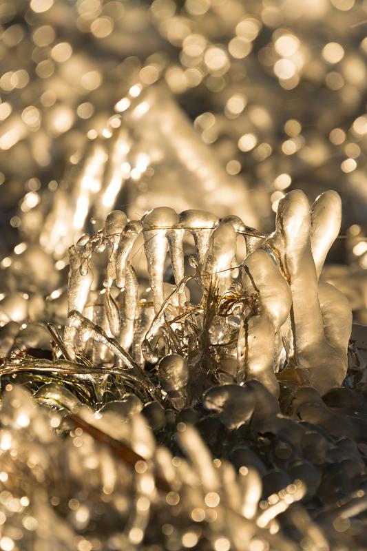 飛沫氷のある朝の情景(琵琶湖)_f0155048_18205426.jpg