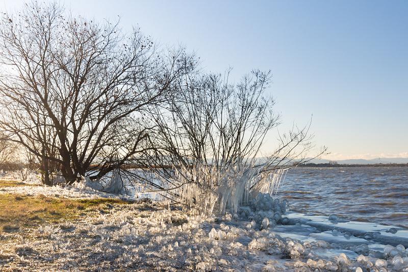 飛沫氷のある朝の情景(琵琶湖)_f0155048_18234689.jpg