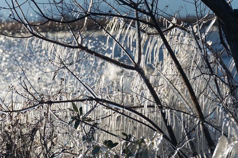 飛沫氷のある朝の情景(琵琶湖)_f0155048_18251939.jpg