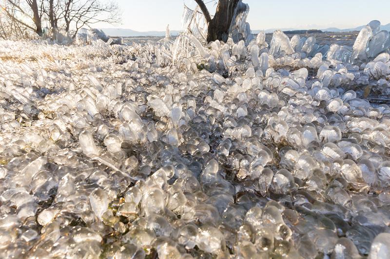 飛沫氷のある朝の情景(琵琶湖)_f0155048_18423896.jpg