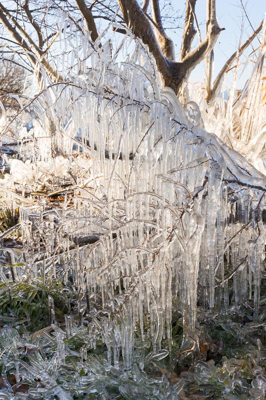飛沫氷のある朝の情景(琵琶湖)_f0155048_18462534.jpg