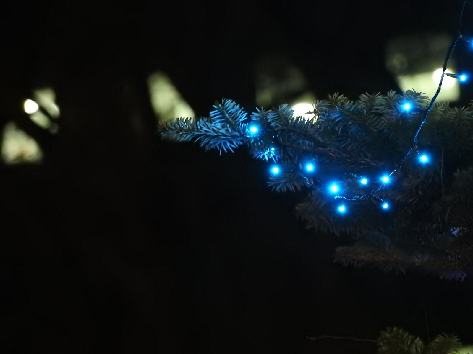 冬のホタルと 冬の星座_e0406450_15091180.jpg