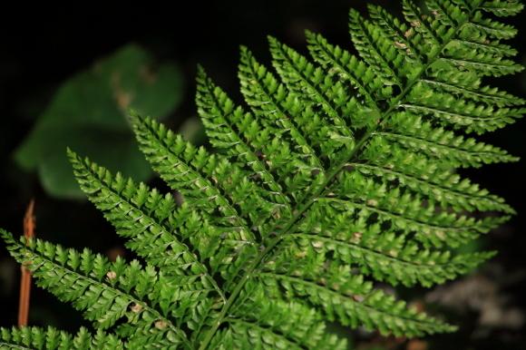 緑の葉っぱ_c0272958_18372962.jpg