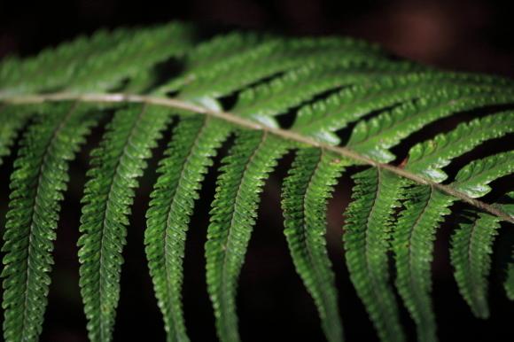 緑の葉っぱ_c0272958_18373823.jpg