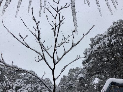 長崎は5年ぶりの大雪〜9日の雪景色_d0336460_01211369.jpeg