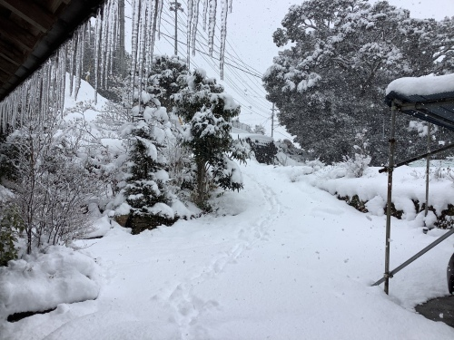 長崎は5年ぶりの大雪〜9日の雪景色_d0336460_01234680.jpeg